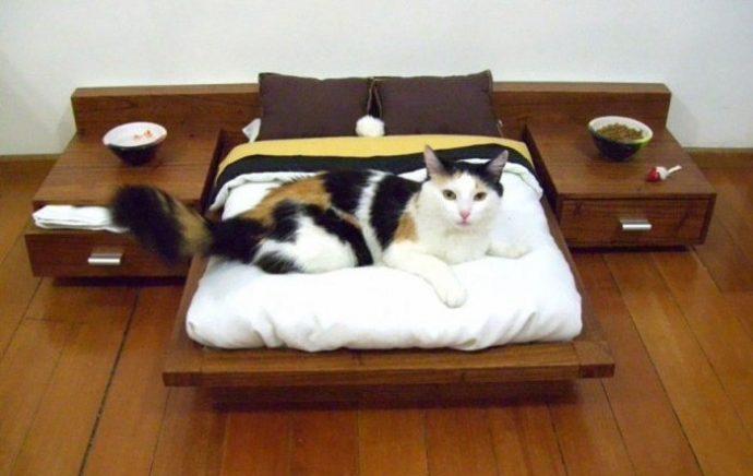 кошкин дом рис 2