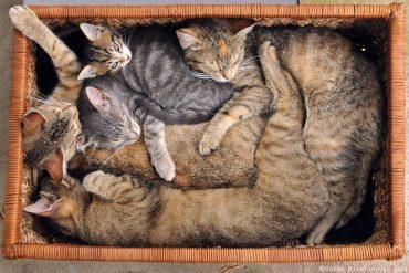 cats-organize