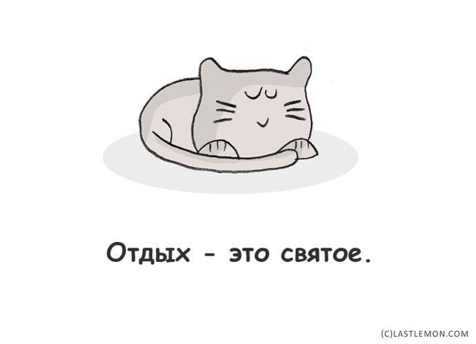 Lifestyle по-кошачьи