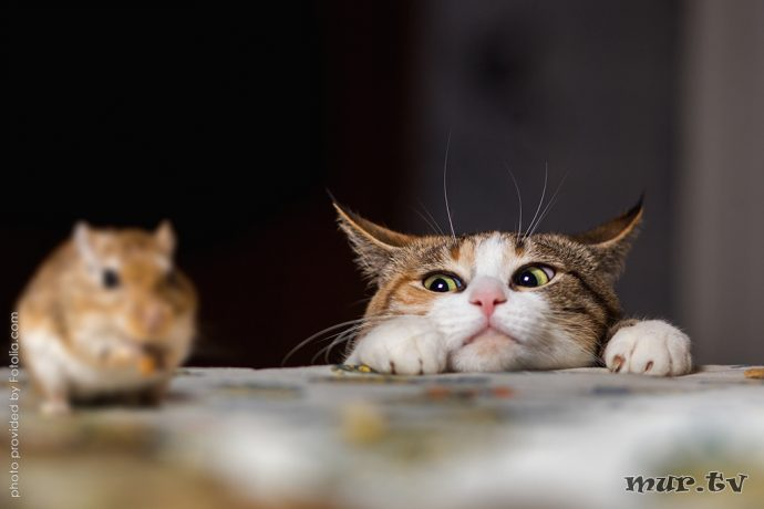 коты рис 8