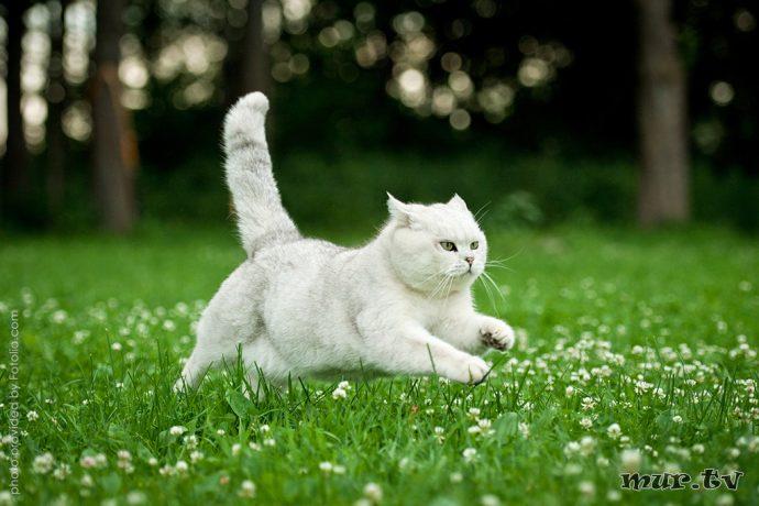коты рис 9