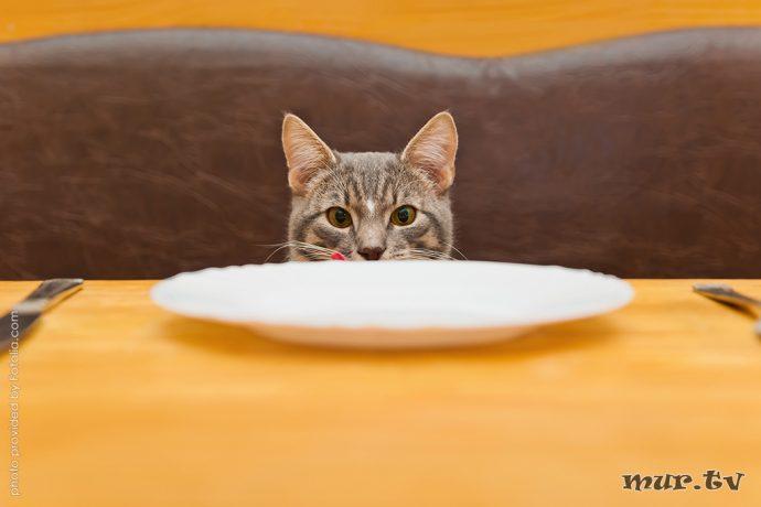 коты рис 6