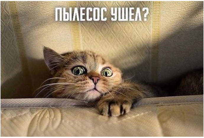 Кот + пылесос