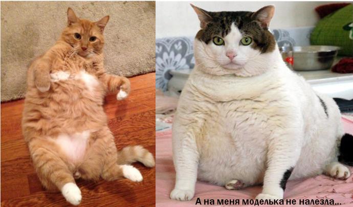 окрас котов рис 5