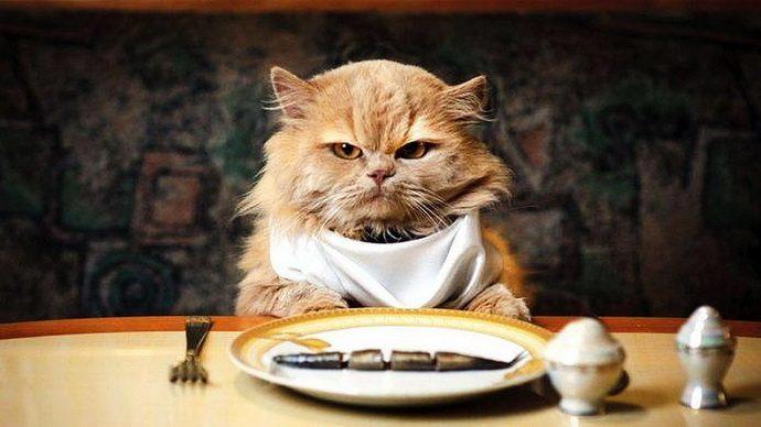 кошачий этикет