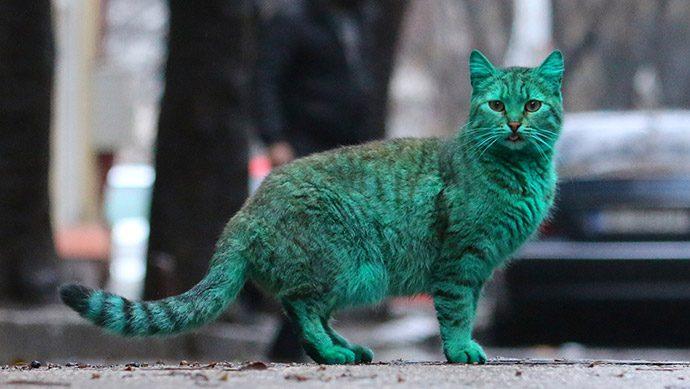 окрас котов