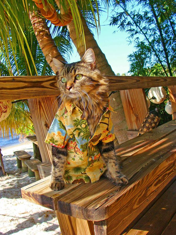 кошачья мода рис 6