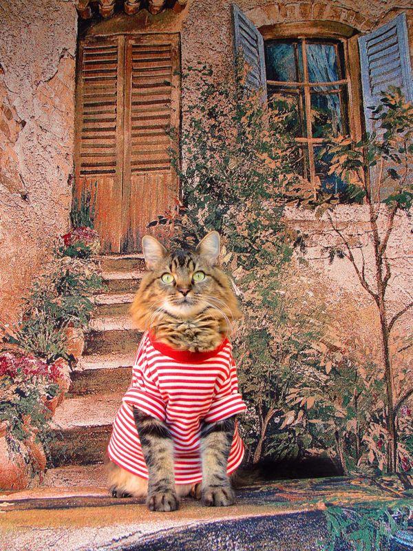 кошачья мода рис 7
