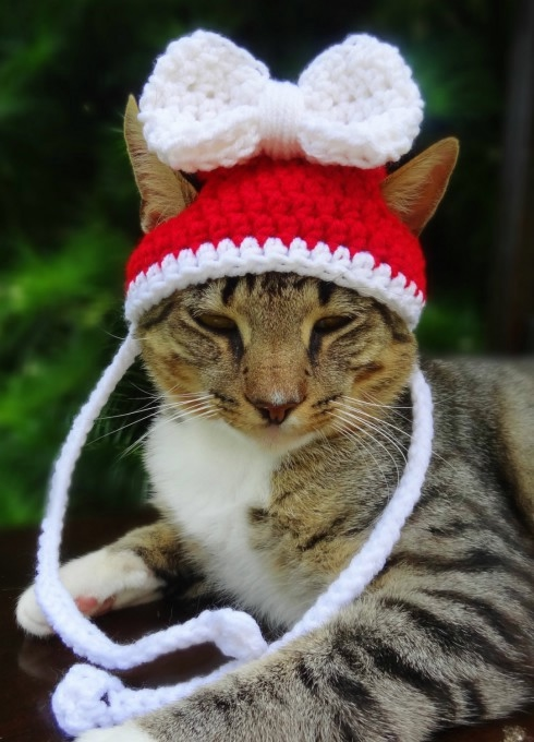 кошачья мода рис 3
