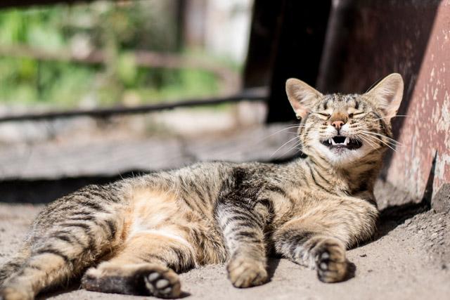улыбка кот