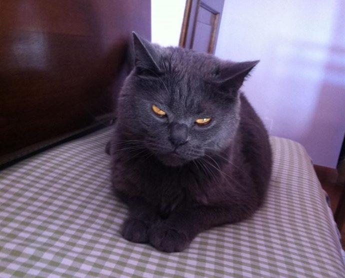 злые коты рис 10