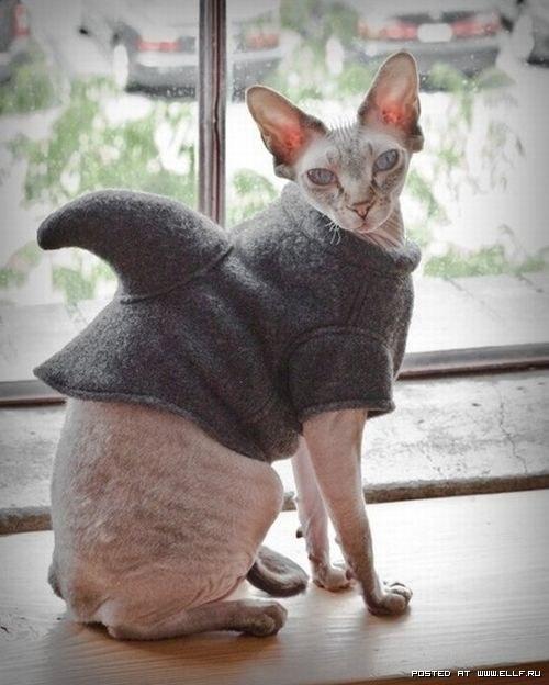 кошачья мода рис 11