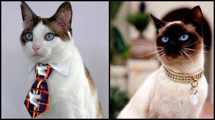 кошачья мода рис 14