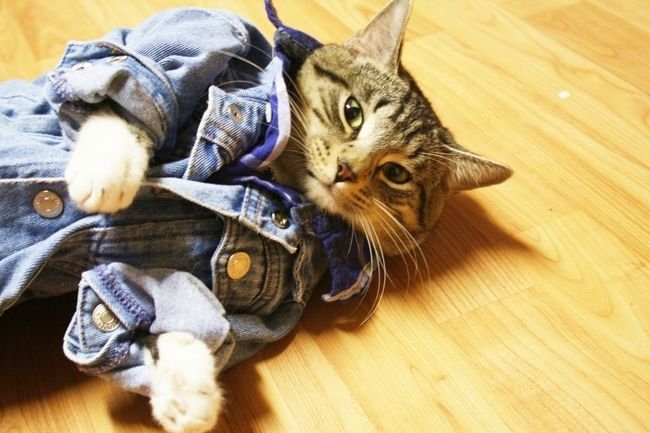 кошачья мода рис 8
