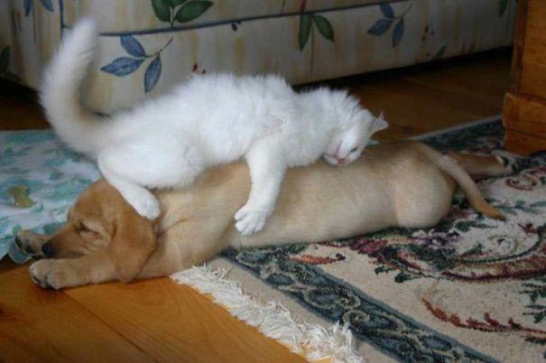 кот и пёс рис 8