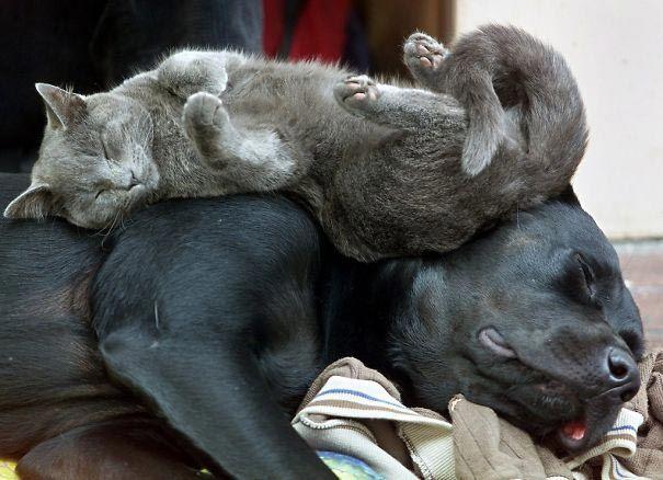 кот и пёс рис 9