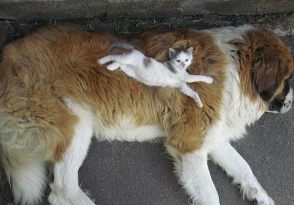 кот и пёс рис 5