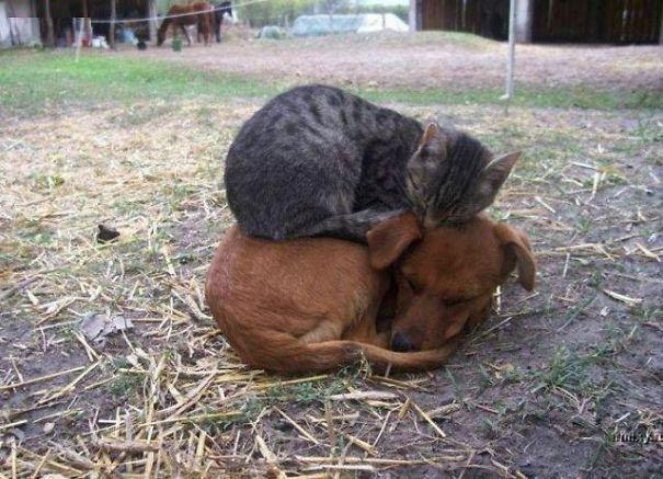 кот и пёс рис 10