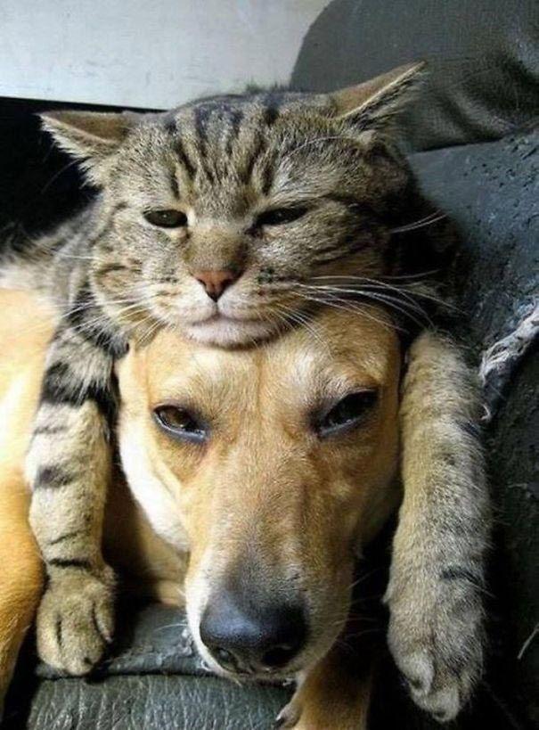 кот и пёс рис 7