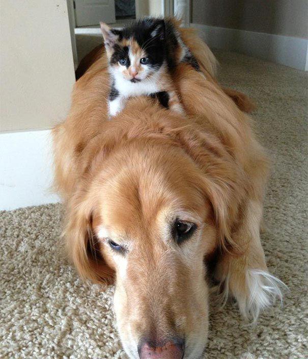 кот и пёс рис 4