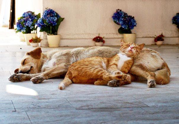 подушка сон фото