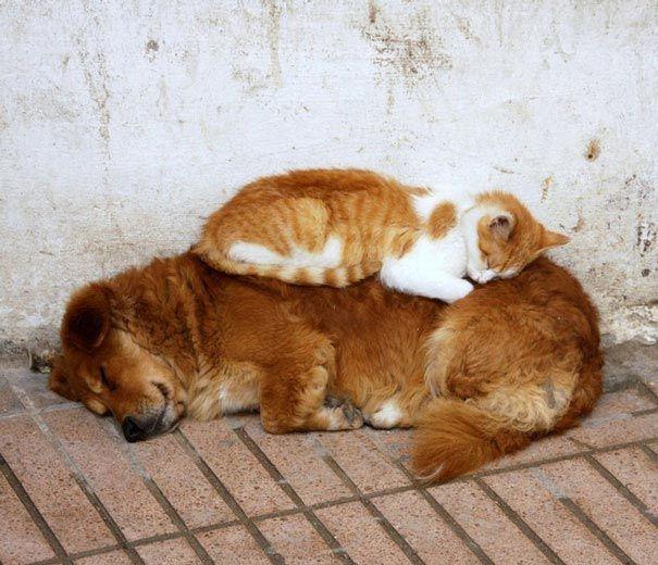 кот и пёс рис 3