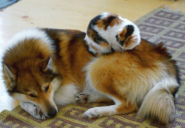 кот и пёс рис 2