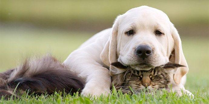 кот и пёс рис 11