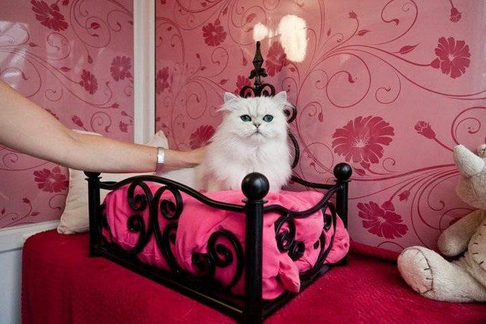 богатый кот рис 3