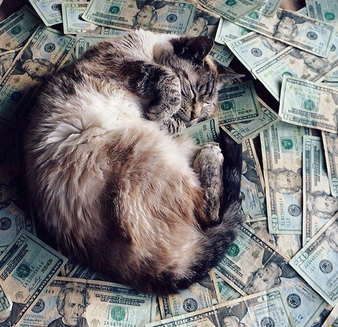 богатый кот рис 2