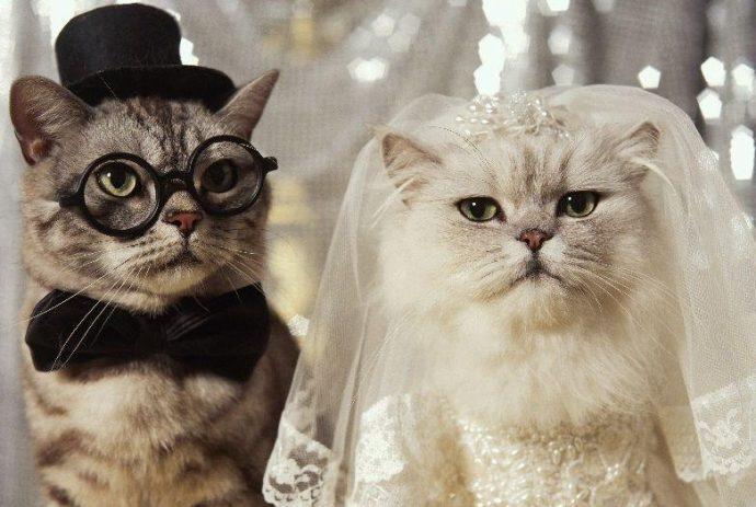 свадьба котов рис 2