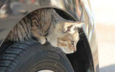 защита котов