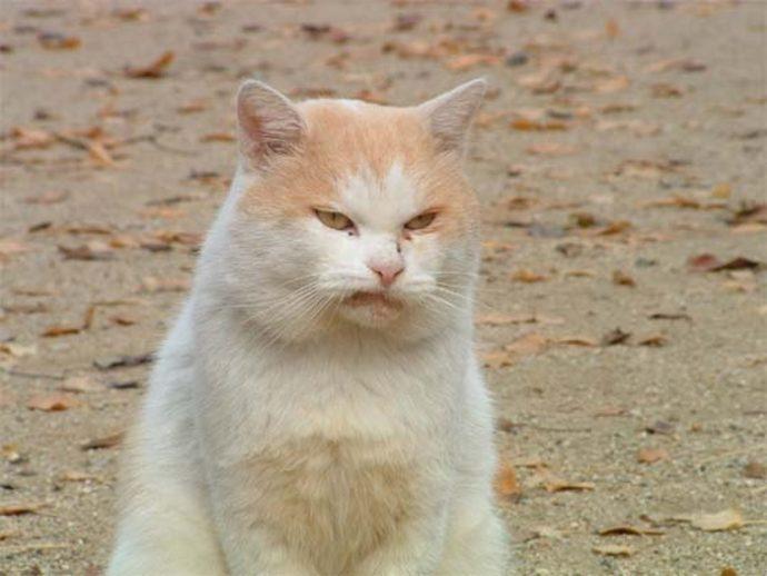 злые коты рис 11