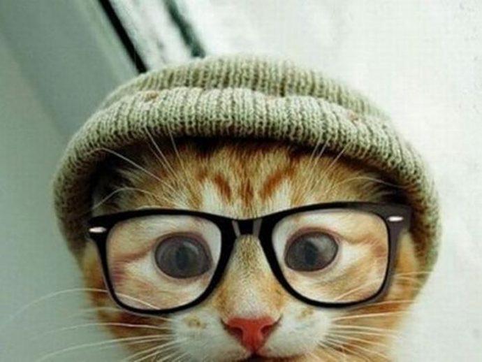 кошачья мода рис 12