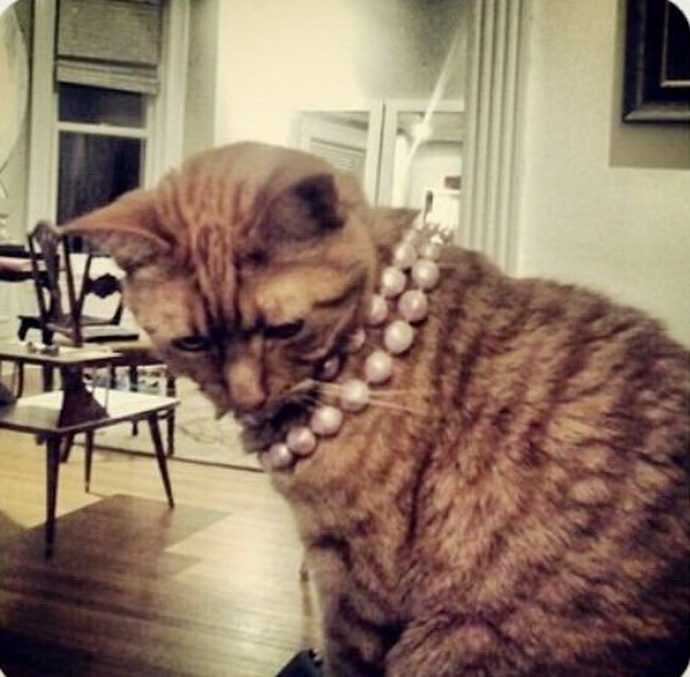 богатый кот рис 7