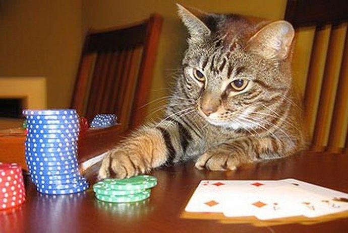 богатый кот рис 6