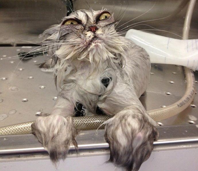 коварный кот