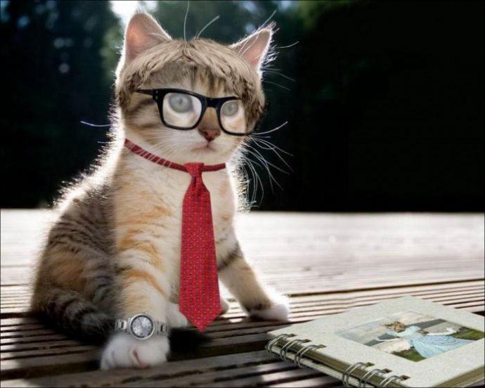 кошачья мода рис 13