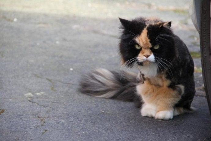 злые коты рис 13