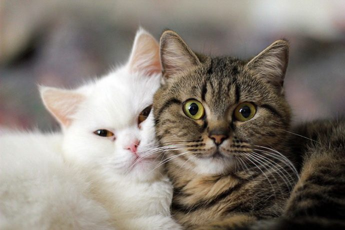 коты+весна=любовь