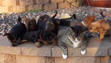 9-puppies
