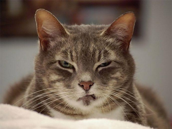 злые коты рис 7