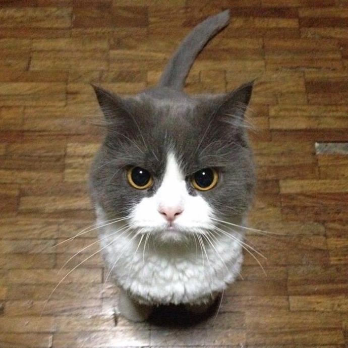 злые коты рис 5