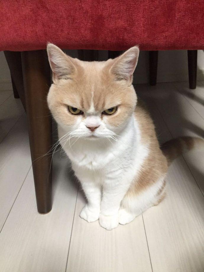злые коты рис 2