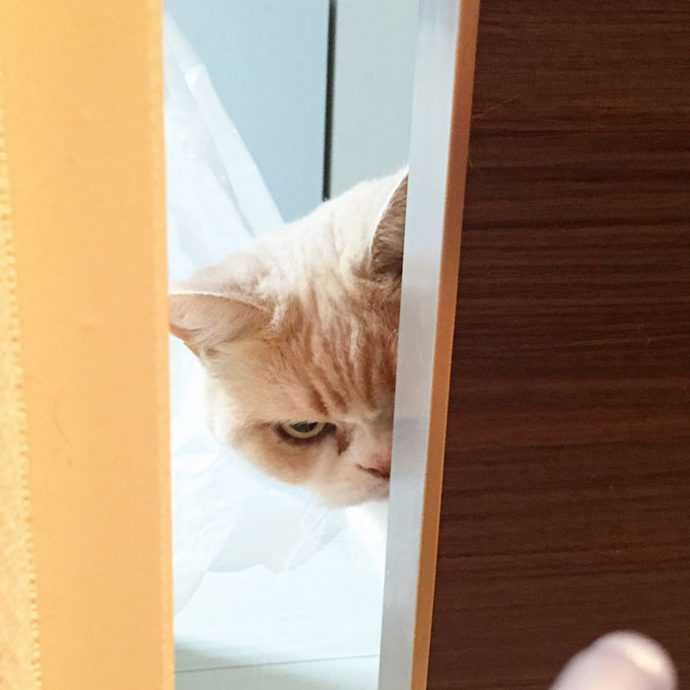 злые коты рис 3