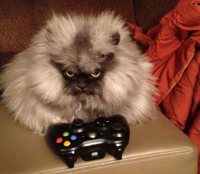 злые коты рис 12