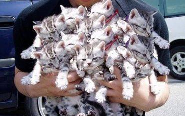 кошка-мама