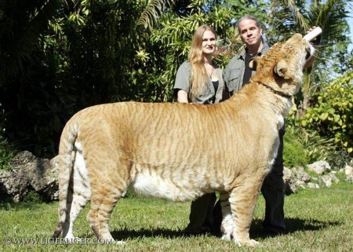 bigcat (6)