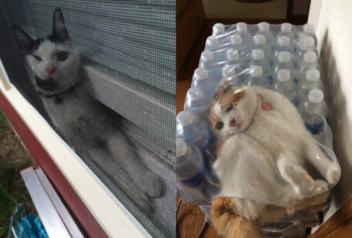 коту не везет