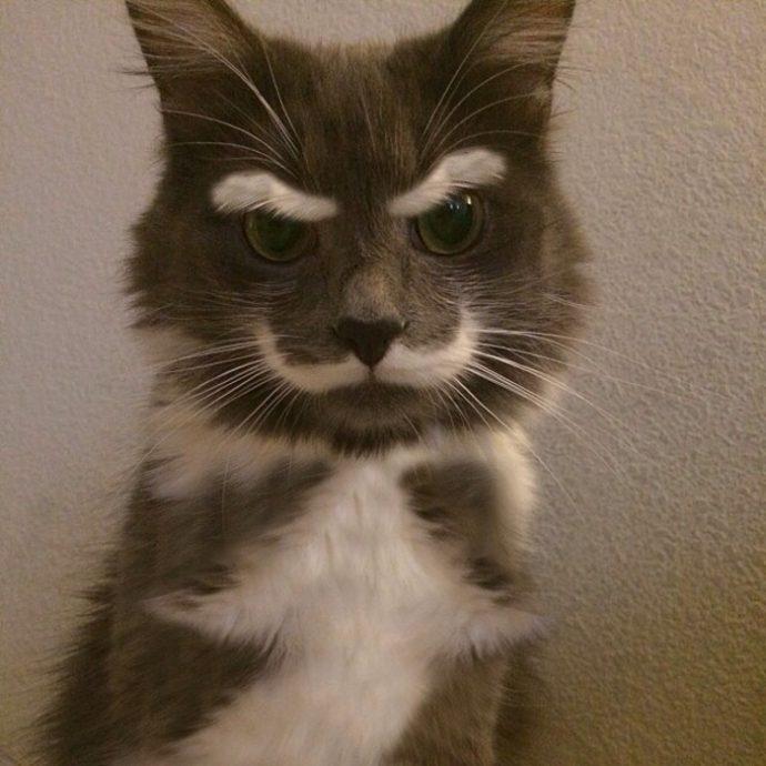 злые коты рис 14